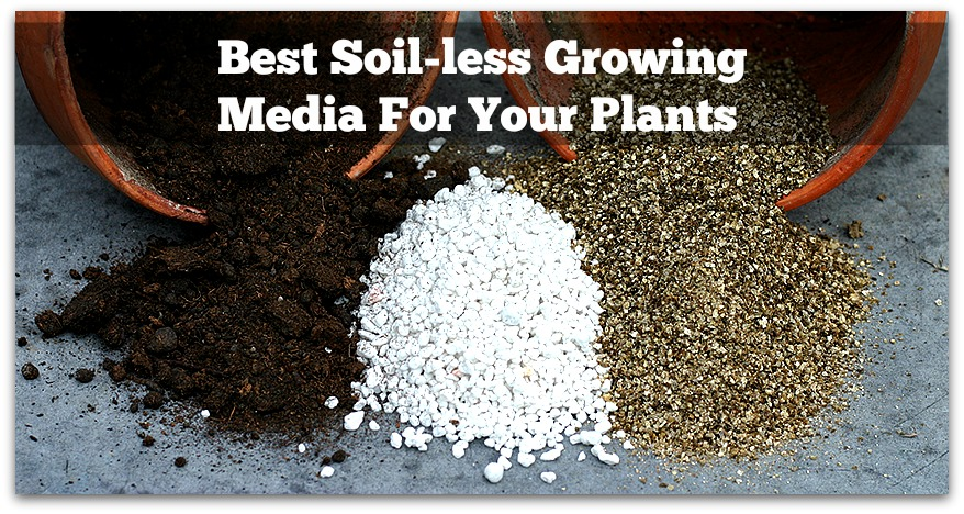 5 Soilless Media You Should Be Aware Of For Growing Vegetables