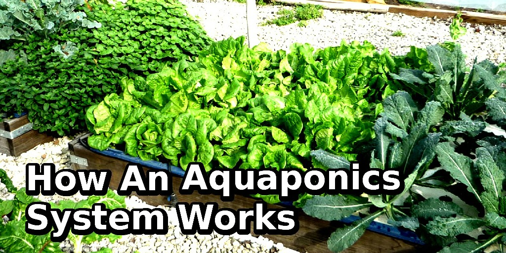 what is aquaponics system