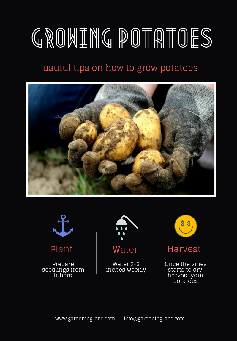 How To Plant Potatoes  All You Need To Know About Growing
