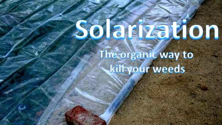 what is solarization
