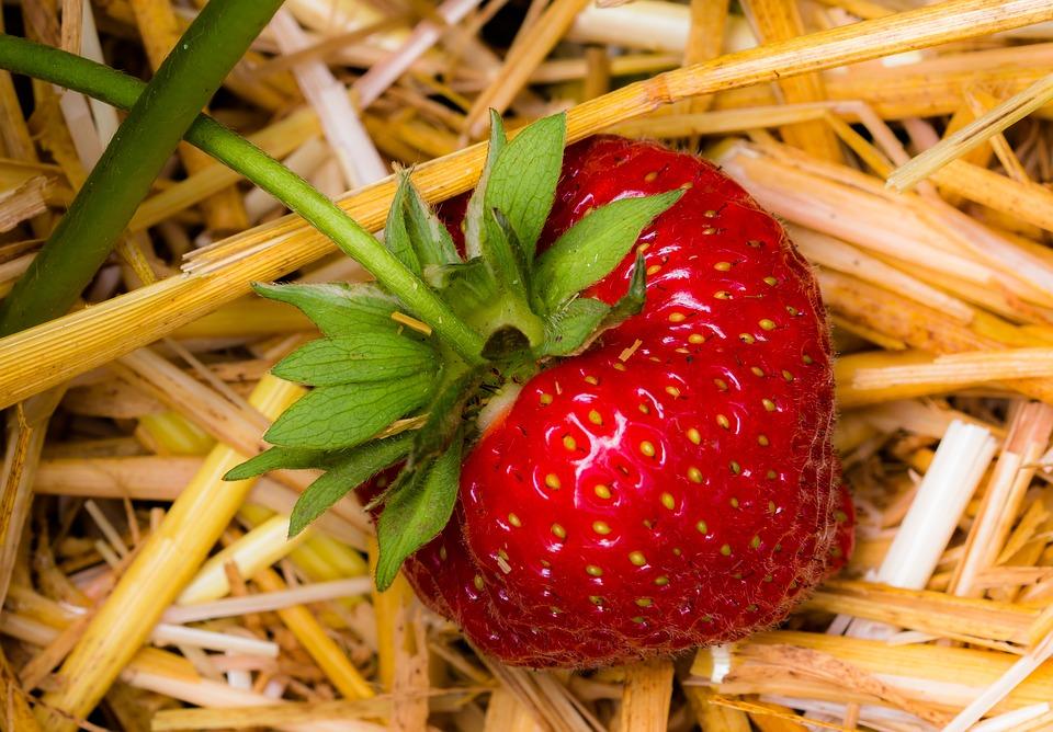 mulch for strawberry plants