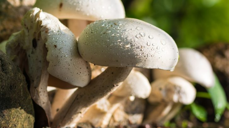 mushroom growing tips