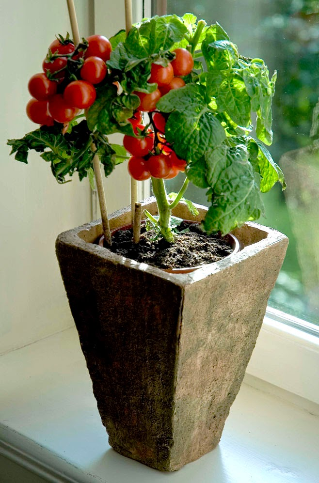 best plants for containers