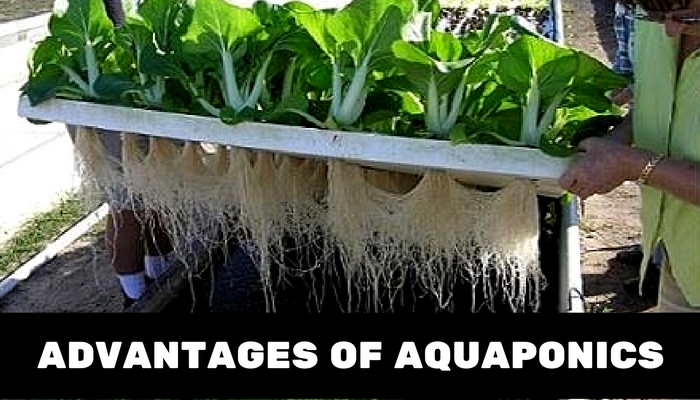 benefits of Aquaponics