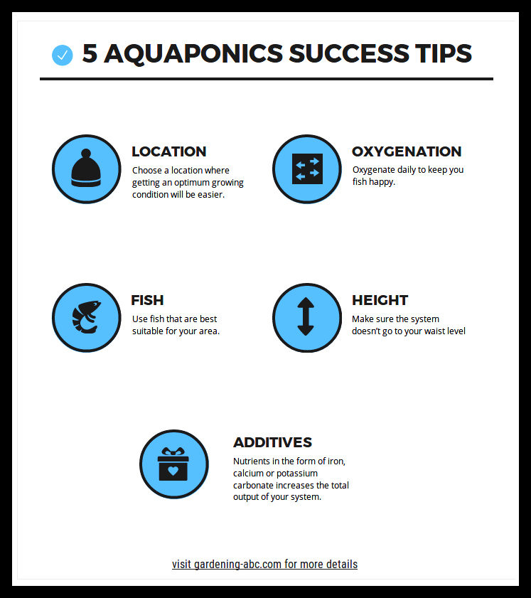aquaponics success tips infographics