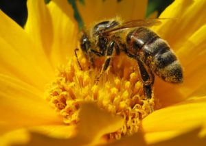 what is insect pollination