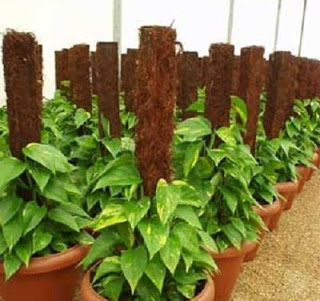 plants in coco coir