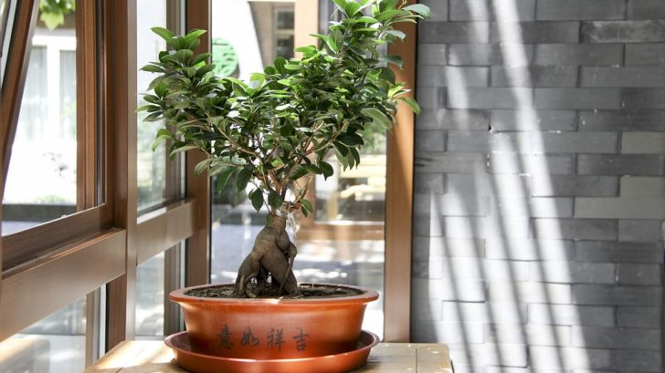 bonsai-root-pruning
