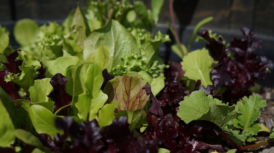 leafy vegetables for a shady garden